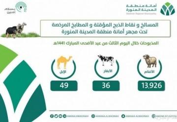 مسالخ المدينة المنورة تستقبل أكثر من 14 ألف أضحية في ثالث أيام عيد الأضحى