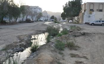 """نزوح سكان """"شرفية الطائف"""" بسبب المياه الآسنة والروائح الكريهة"""