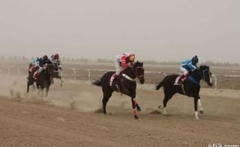 الجواد (سنجاري) يفوز بكأس الحفل الثاني عشر لسباق نادي الفروسية بالخفجي