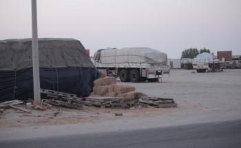 سوق الإبل والأعلاف بالخفجي.. عشوائية تنتظر التنظيم