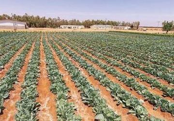 الصندوق الزراعي يمول 33 مشروعًا ويؤجل أقساط 4398 مستفيداً لتخفيف تداعيات «كورونا»