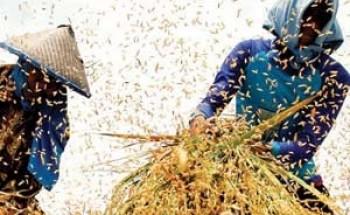 أسعار الغذاء العالمية ترتفع 1 %