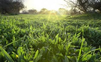 الزعاق: غداً.. تذبل برودة الشتاء فتعتدل الأجواء ويبدأ زحف الصيف