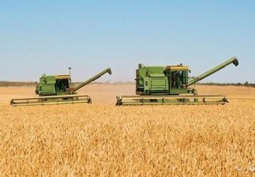 بدء صرف مستحقات الدفعة السادسة لمزارعي القمح المحلي
