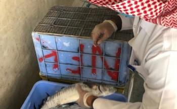 بلدية الخفجي وهيئة الدواء والغذاء تنفذان حملات رقابية مشتركة على محلات الأسماك واللحوم