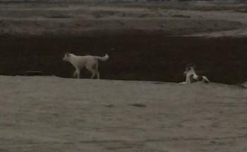الكلاب الضالة تحاصر سكان حي خزامى في الخفجي