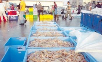 أسواق الأسماك بالشرقية تستقبل باكورة صيد الروبيان