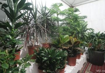 «نباتات الأندلس» تقدم تشكيلة واسعة من النباتات والورود الشتلات