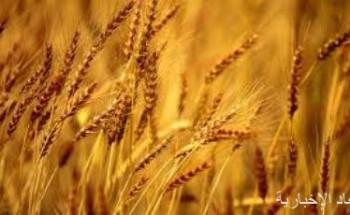 مؤسسة الحبوب تنفي رفع أسعار الشعير بداية يناير المقبل