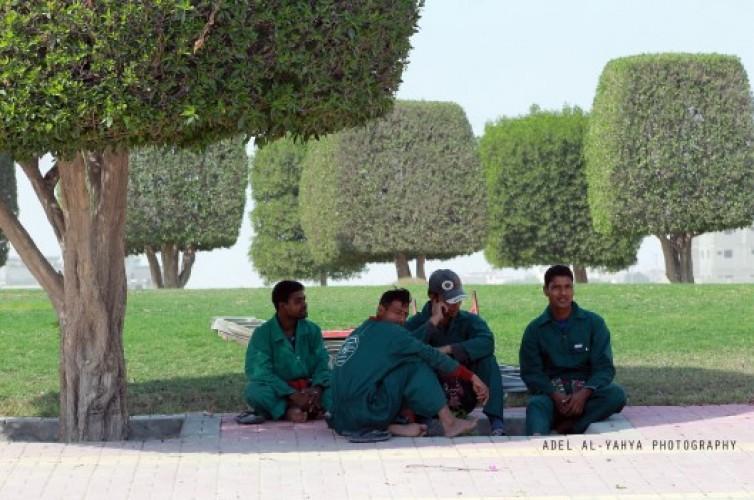 عدسة أبعاد الخفجي ، عمال يستظلون تحت شجره من شدة حرارة الشمس ، تصوير – عادل اليحياء