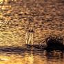 هدوء البحر – عدسة – عبدالعزيز العنزي
