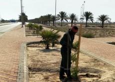 بلدية الخفجي تجري أعمال صيانة وزراعة بالمحافظة
