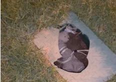 بالفيديو: أسلاك مكشوفة وغرف تفتيش مكسورة أخطار تحدق بالأطفال في كونيش الخفجي
