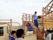"""إقبال مربي الماشية على أعلاف """"التسمين"""" في القنفذة"""