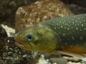 علماء يستعينون باختبار DNA لمعرفة الأسماك التى تعيش فى البحيرات والأنهار