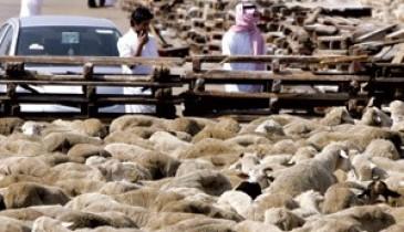 لمواجهة ارتفاع أسعار اللحوم.. دعم سوق أغنام جدة بـ3 ملايين رأس