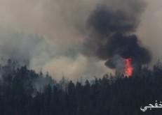 مستوطنون يشعلون النيران بأشجار زيتون جنوب نابلس