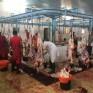 بلدية الخفجي توجه بزيادة الكوادر في المسلخ وتسمح بذبح الأضاحي بالمطابخ المطبقه للإشتراطات