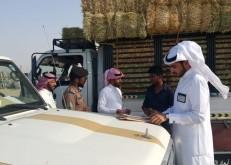 لجنة توطين الخفجي تواصل مهامها وتضبط ٢٣ مخالفاً في الأعلاف