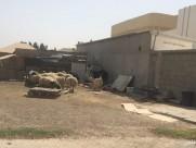 بالصور: شبوك الماشية تنتشر في أرجاء حي الفيصلية وعلى مشارف الخفجي