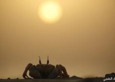 تنوع الكائنات الحية في سواحل الخفجي – عدسة: علي الشمري