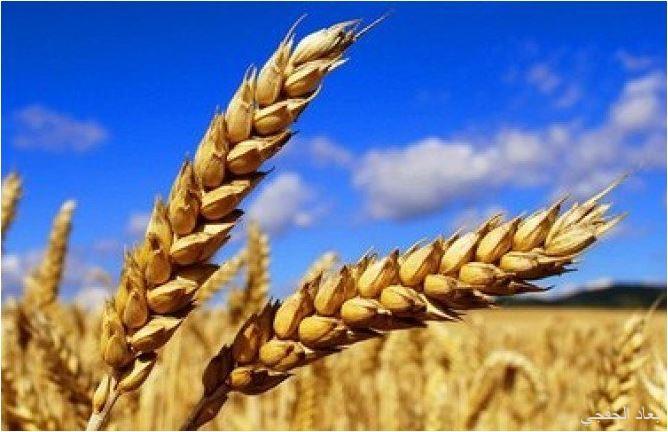 مجلس الشؤون الاقتصادية والتنمية يستعرض عرض وزارة البيئة حول استراتيجية الخزن الغذائي